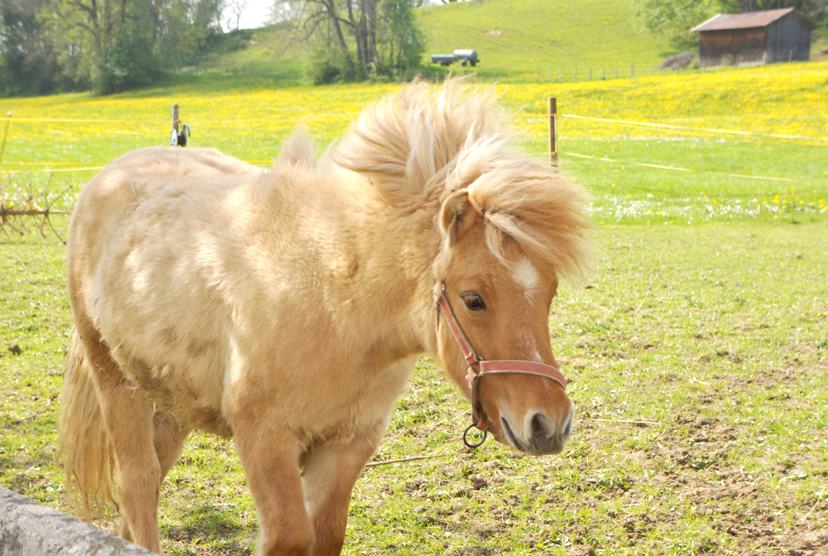 Unser Pony Caramell